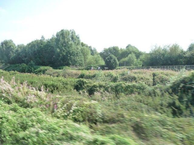 Taunton : Green Bushes
