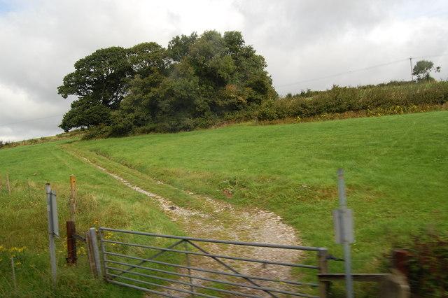 Gate, track, copse