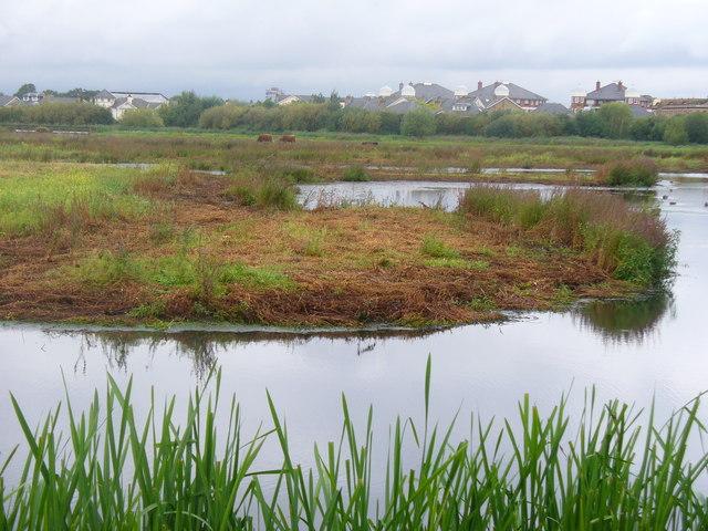 Water Meadows, Barnes