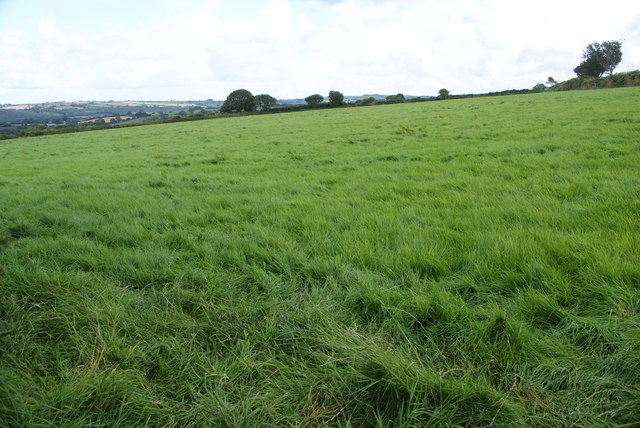 Field near Pentre Ifan