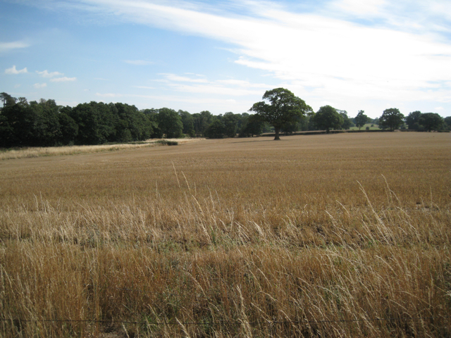 Harvested field, Cornets End