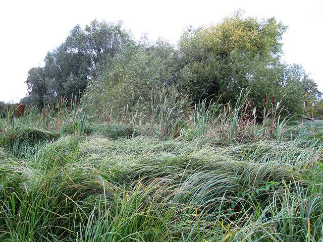 Wetlands in Morden Hall Park