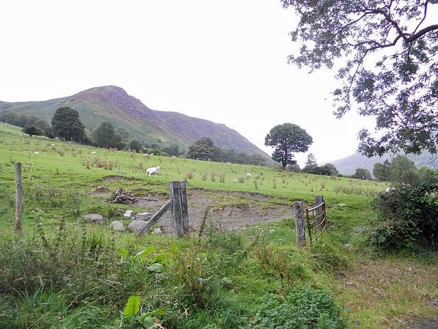 Hillside at Glan-yr-afon