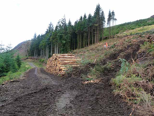 Forestry on the slopes above Loch Frisa