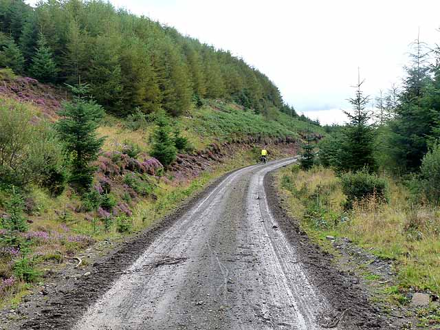 Forest road above Loch Frisa