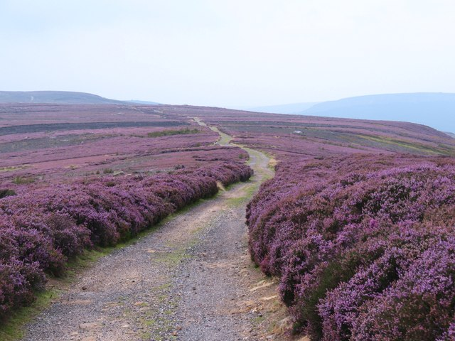 Cleveland Way on Battersby Moor