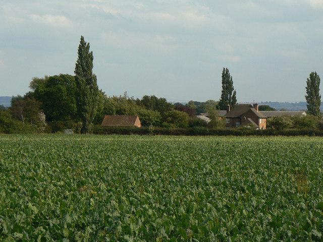 Lower Brackendale Farm