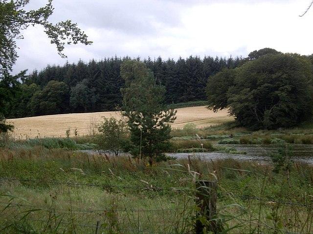Marshy pond near Craig Castle