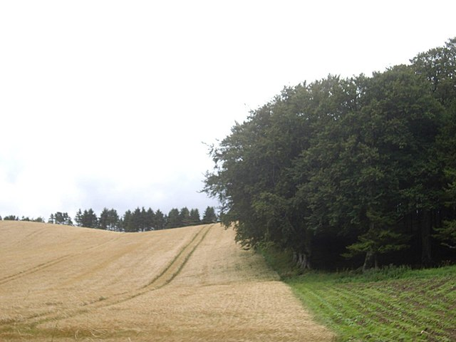 Woodland edge with cereal and hay (August)