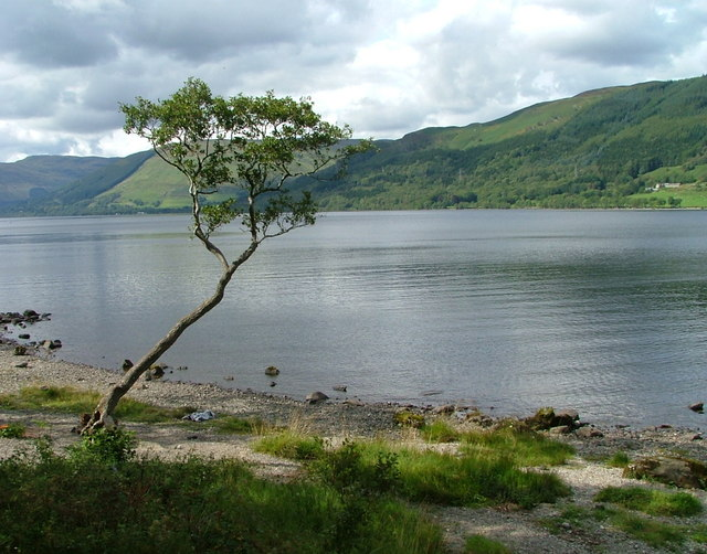 Tree on the south shore of Loch Earn