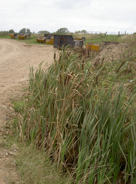 Bulrushes give the game away