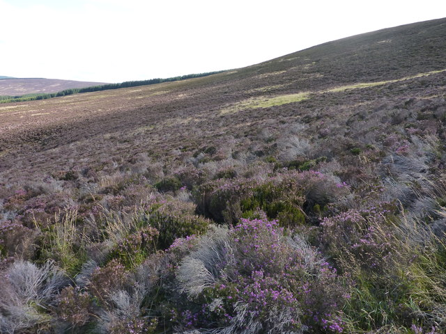 Moorland on the slopes of Kerloch