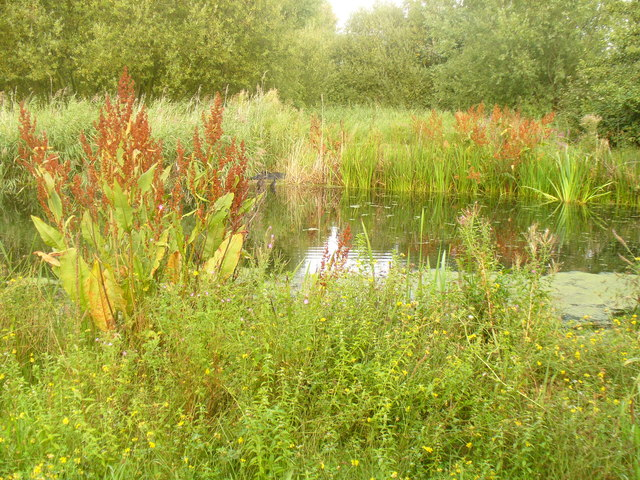 Pond in the Wildside