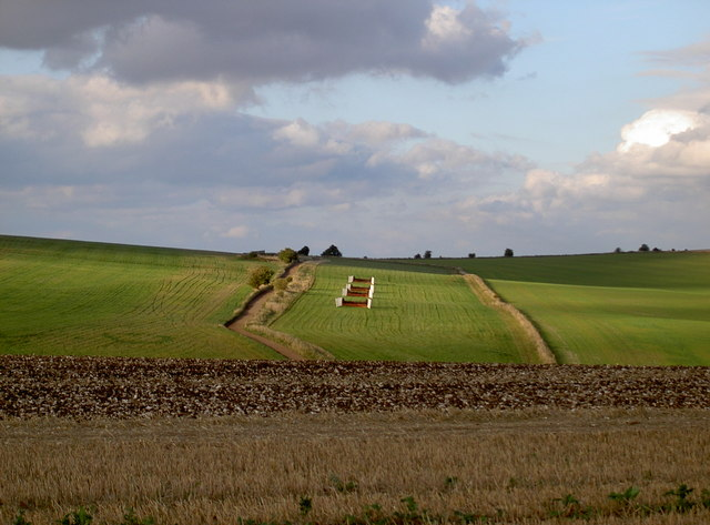 Gallops in the evening sunshine