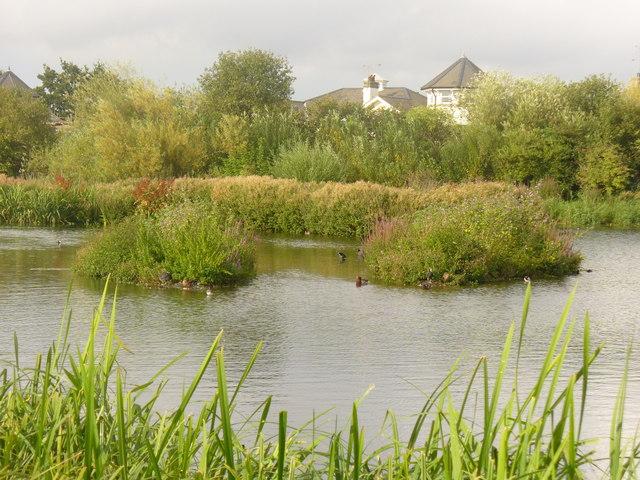 Reedy Inlet, London Wetland Centre