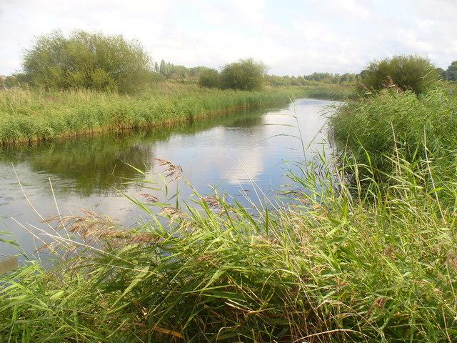 Reedy Pond, London Wetland Centre