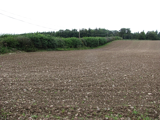 Newly cultivated field