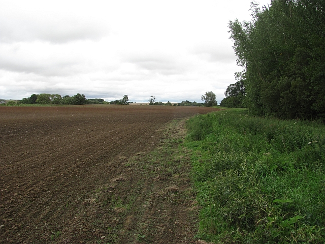 Newly cultivated field, Edenbank