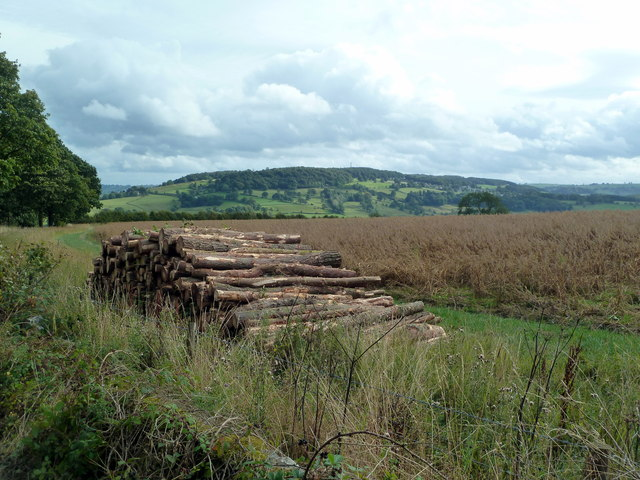Cut logs above the Wye Valley