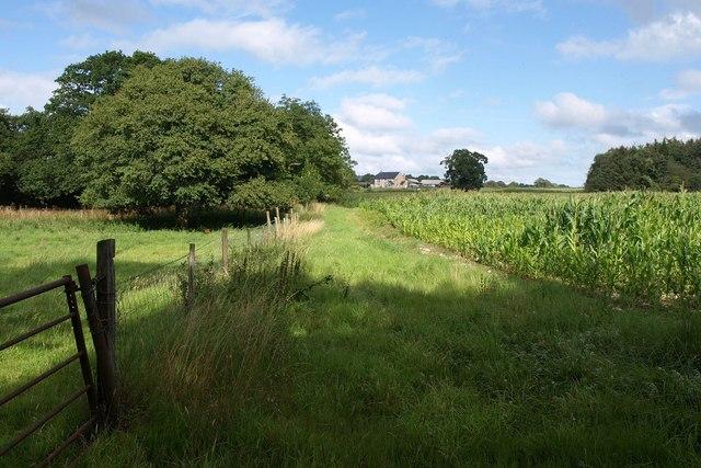 Fields near Great War Plantation