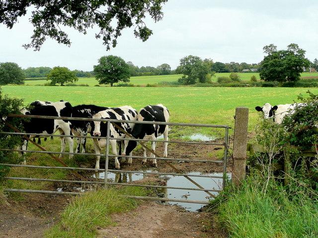 Cheshire dairy land