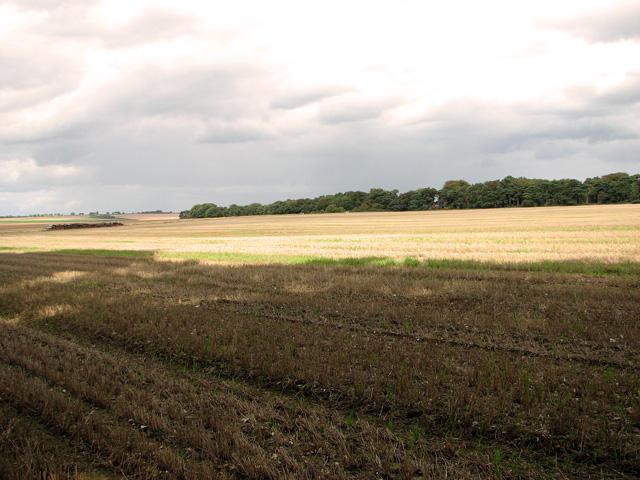 View towards Long Belt, Gayton