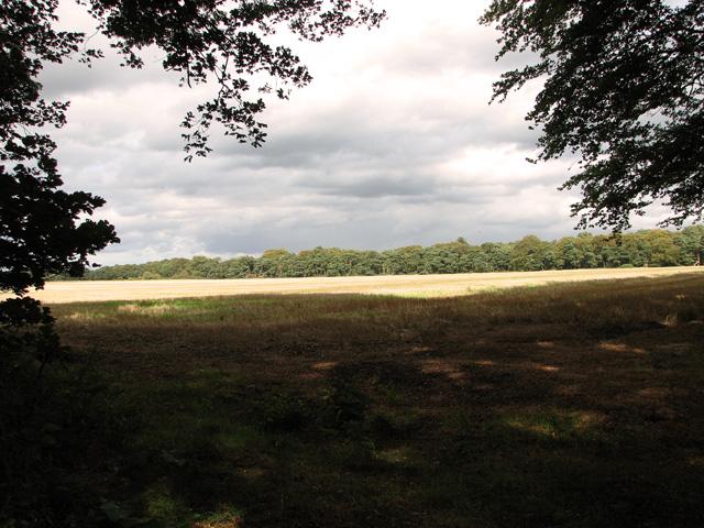 View from Gravelpit Plantation, Gayton