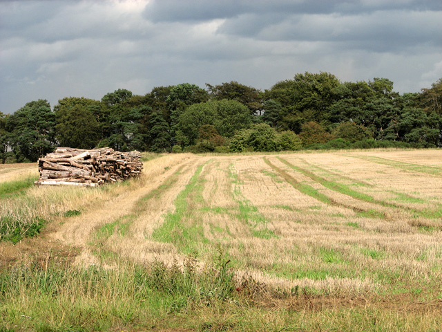 Harvested field by Long Belt, Gayton