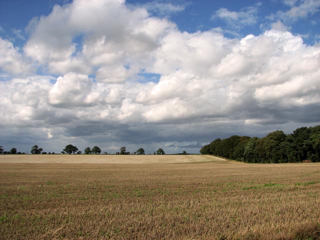 Undulating field west of Middle Belt, Gayton