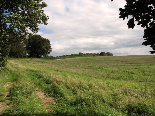 The southern edge of Gravelpit Plantation, Gayton