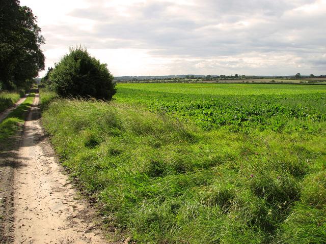 Bridleway by Green Hill Wood, Gayton