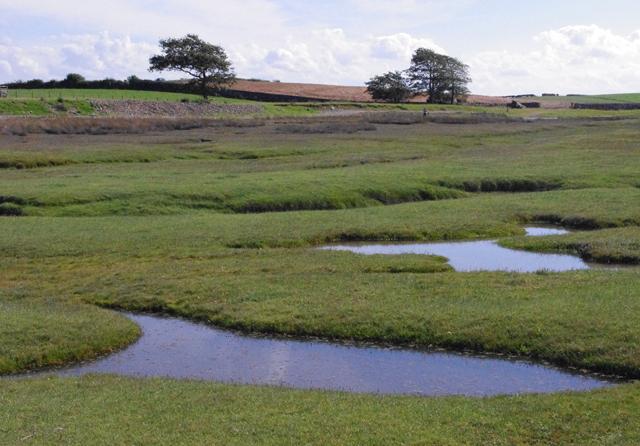 Sand Gate Marsh