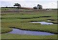 SD3575 : Sand Gate Marsh by Ian Taylor