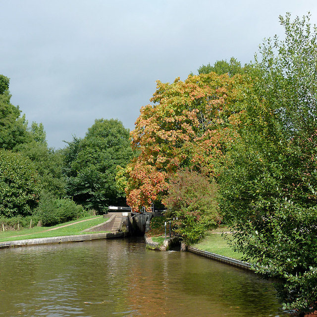 Autumnal maple tree at Meaford Bottom Lock, Staffordshire