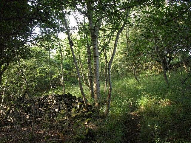 Woodland near Batt's Coombe