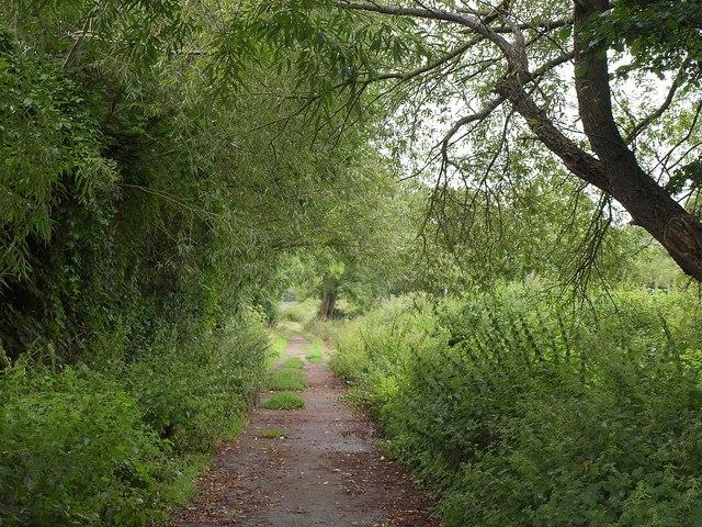 Wedmore Moor Drove