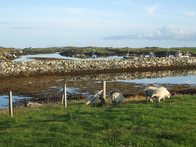 Sheep and boats, Leverburgh