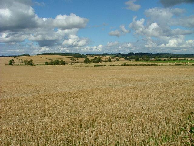 Fields at Merriness