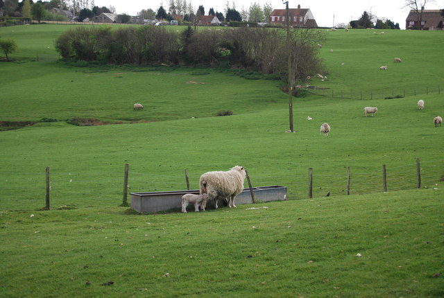 Ewe and lamb, Brook Farm