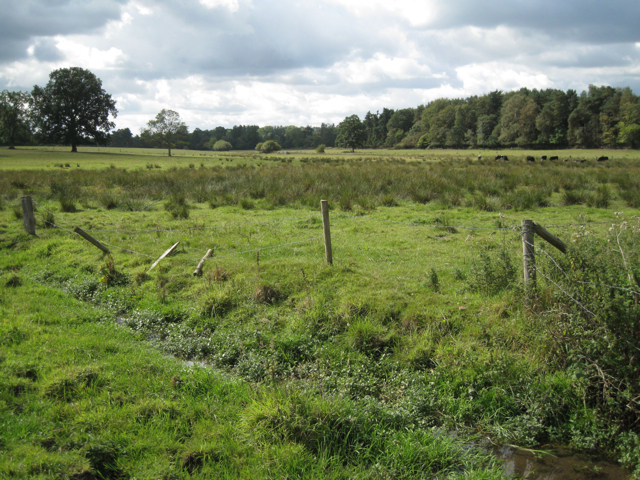Rushy meadow with ditch