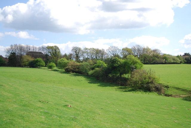 Hedge / linear woodland, Toke Farm