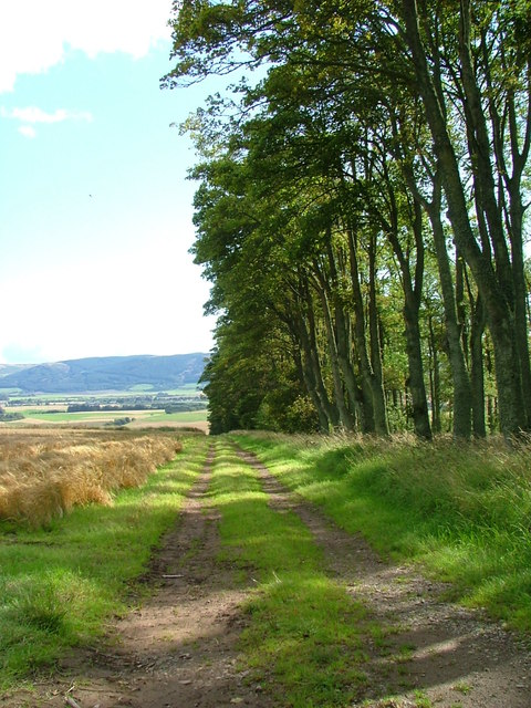 Track by the trees