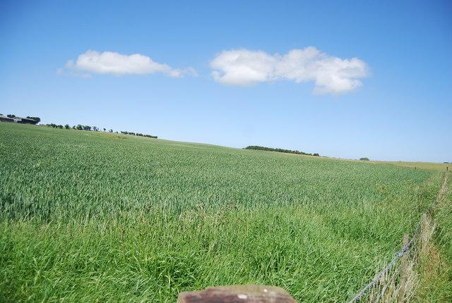 Wheat field by Sea Lane