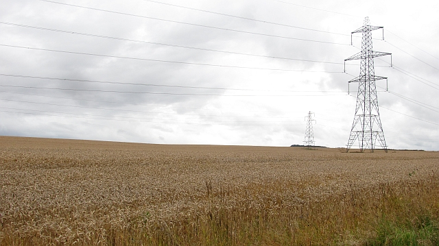 Wheat field and power lines