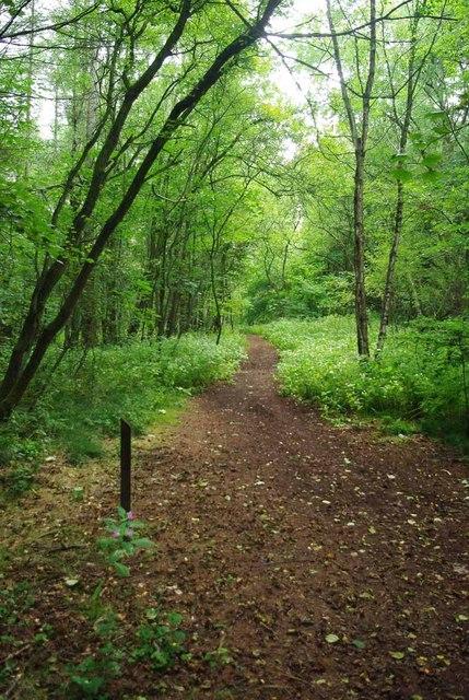 Path Through Springpool Wood