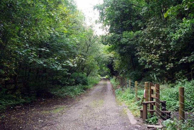 Lymes Rd & Springpool Wood
