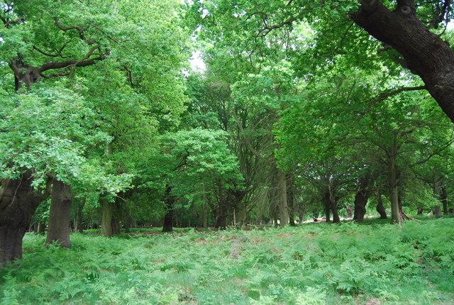 Woodland in Richmond Park