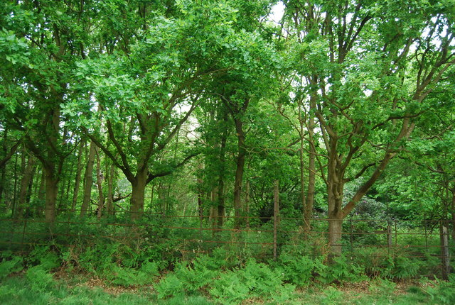 Sidmouth Wood