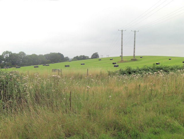 Pasture and power lines north of Bushnell's Green