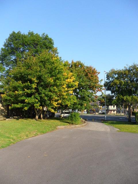 Autumn trees, Ravensknowle Park.